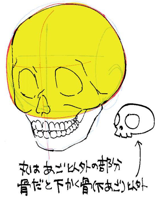 丸は下顎以外の部分