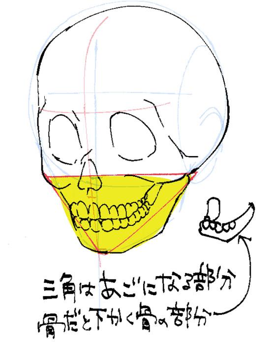 下顎は丸の下の三角