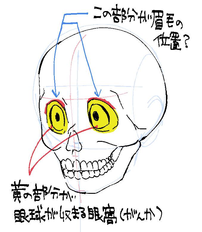 横のガイドは眉毛の位置